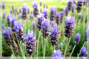 Herbs for Skin Care